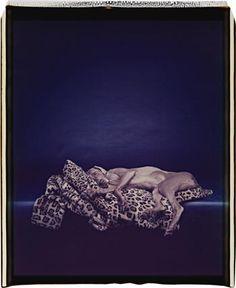 WILLIAM WEGMAN  Leopard / Weimaraner, 1989