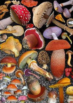 mushroom collage.  lovely colours!