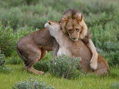 Give me a hug by Antero Topp