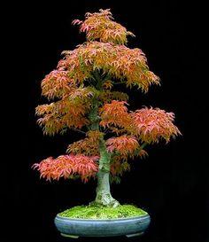 I love this tiny, old trees - so full of life