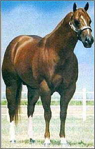 Obvious Conclusion Quarter Horse. I had an off spring. Great Halter horses..