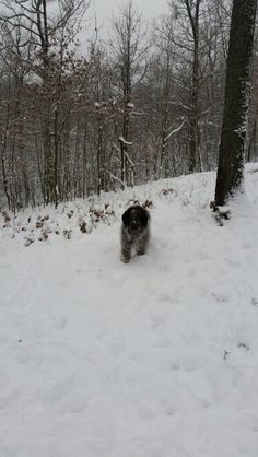 #Kastor in #Winter Wonderland, 2015