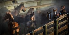 Photograph Kaimanawa Wild Horse Muster - New Zealand by Kimber Brown on 500px