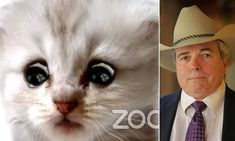 Lawyer becomes an internet sensation after kitten Zoom filter mishap Pirate Eye Patches, White Kittens, Everybody Else, Bbc Radio, The Millions, Lawyer, Viral Videos, Mail Online, Confessions