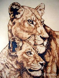cougar pyrography | Adri Pretorius, Lions , in progress , Closeup, Finish Framed