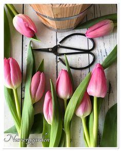 I fiori hanno una capacità davvero speciale, quella di portare un po' della luce e della magica atmosfera primaverile nella nostra casa.E per la casa d'inverno, le bulbose sono una vera…