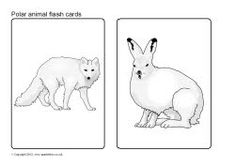 Polar animals picture flash cards