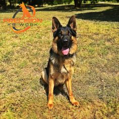 First Steps in basic dog training commands. Learn more about these here.