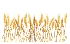 Wheatgrass Transparent PNG Clipart Picture