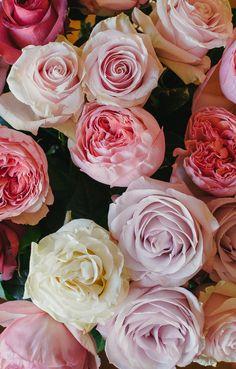 Moonstone (white rose) Secret Gardent (lavender rose) Salmanasar (pink garden rose)