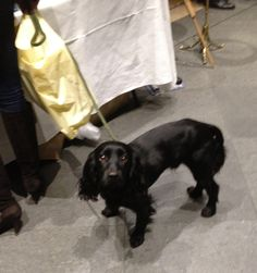 Lupo with Kate at the Burlington Arcade Charity Christmas Bazaar in Westminster, London, November 7, 2012.