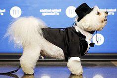 dogs fashion show