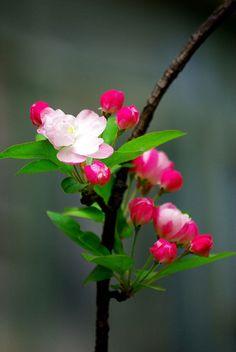 Blossom Garden - Paradise of Flowers! Flowers Nature, Exotic Flowers, Amazing Flowers, Spring Flowers, Flowers Garden, Beautiful Flowers, Tree Garden, Blossom Garden, Blossom Trees