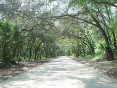 Canopied road in The Ocala National Forest, Florida