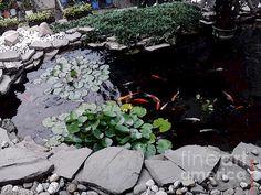 goldfish pond watercolor by sondra faye
