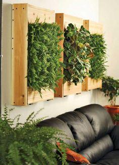 Zimmerpflanzen vertikale gärten farnen holzkasten ledersofa