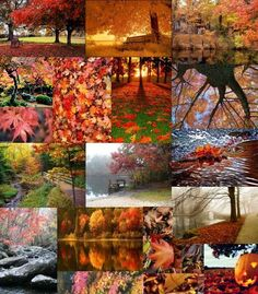 beauty fall autumn collage picture and wallpaper