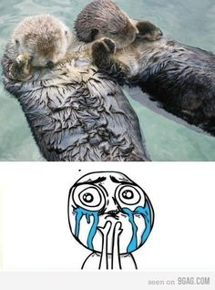 Sp apparently otters hold hands while they sleep s they don't float away. Anyone else dying from the cute?