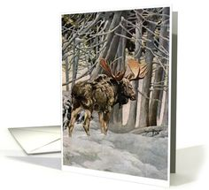 Wildlife card: Moose Notecards Greeting Card by Sandy Buckley