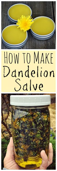 When dandelions are blooming make this healing dandelion salve! When dandelions are blooming make this healing dandelion salve! Healing Herbs, Medicinal Herbs, Natural Healing, Natural Home Remedies, Herbal Remedies, Health Remedies, Natural Medicine, Herbal Medicine, Limpieza Natural