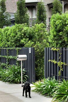 Garden Fencing Ideas (An Inspirational Guide to Build Garden Fence – Design Backyard Privacy, Backyard Fences, Garden Fencing, Front Yard Landscaping, Trellis Fence, Landscaping Ideas, Hedges Landscaping, Home Fencing, Florida Landscaping