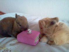 Bunny. Moje małe kroliczki :) Rabbit, Animals, Animales, Animaux, Rabbits, Bunny, Bunnies, Animal, Animais