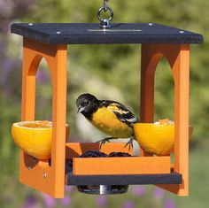 Oriole Fruit & Jelly Gazebo Feeder: The solid roof ensures your grape jelly stays free of debris until the orioles are ready to eat. Removable jelly dish sits in the middle of the covered feeder, so orioles can enjoy fresh food at any time of the day. Bird Feeder Craft, Bird House Feeder, Homemade Bird Houses, Homemade Bird Feeders, Oriole Bird Feeders, Squirrel Feeder, Wood Bird, Wild Bird Food, Backyard Birds