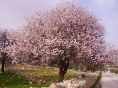 Most Beautiful Trees | The most beautiful flowering trees in your garden