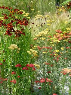 Weekend Chore: Divide and Conquer Your Perennials