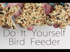 Bird Feeders Kids Can Make | How Does She