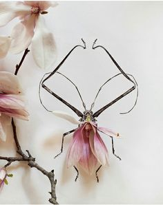 flowers + insects = amazing.