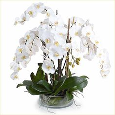 (Faux, Realistic) Phalaenopsis Orchid White: Our most popular white Phalaenopsis Orchids in our Faux Flowers, Love Flowers, Beautiful Flowers, Large Flower Arrangements, Orchid Arrangements, Phalaenopsis Orchid, Orchid Plants, Ikebana, Orchid Leaves