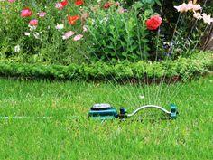 Het is hoogzomer en we zijn zoveel mogelijk buiten, om te zonnebaden, te barbecueën en ontspannen te genieten van de bloemen, bijen, vlinders en van de vogels die een slokje komen nemen uit de drinkschaal of er enthousiast spetterend in badderen. Steek af en toe de handen uit de mouwen om ervoor te zorgen dat de tuin nog zo lang mogelijk mooi en fleurig blijft…