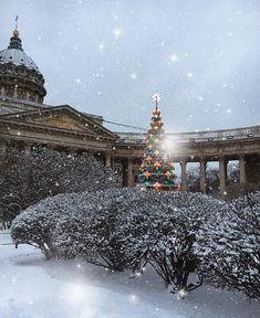 Красавица-елка у Казанского кафедрального собора.   Автор фото: Christina_gevorgyan.  #этноспб #Питер #НовыйГод