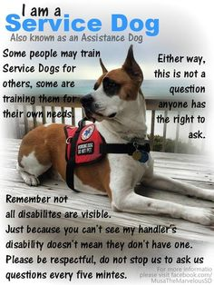 please, give us our space Psychiatric Service Dog, Animal Heros, Emotional Support Animal, Dog Information, Work With Animals, War Dogs, Dog Things, Therapy Dogs, Multiple Sclerosis