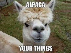 40 Funny Animal Photos & GIFS