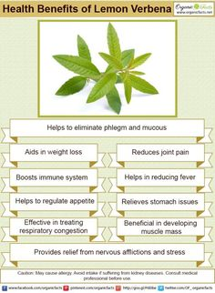 Health benefits of lemon verbena include its ability to protect muscles, reduces inflammation and much more heath benefits of lemon verbena click it
