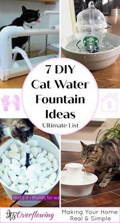 Dog Water Fountain, Cat Fountain, Fountain Ideas, Water Fountains, Drinking Fountain, Cat Walkway, Diy Cat Enclosure, Cat Hacks, Cat Diys