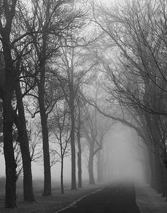 I love creepy woods pictures in black and white....