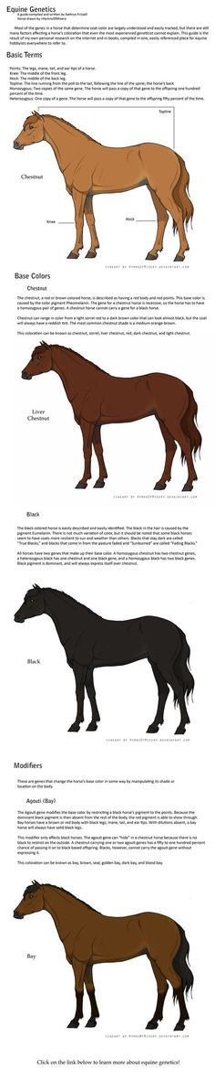 Equine Genetics Guide: Part 1 by ~daughterofthestars