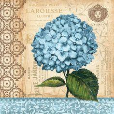 Posterazzi Hydrangea Canvas Art - Gregory Gorham x Hortensia Hydrangea, Blue Hydrangea, Posters Vintage, Vintage Prints, Etiquette Vintage, Decoupage Paper, Vintage Ephemera, Vintage Pictures, Vintage Flowers