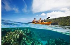 Kayaking in Hawaii over the coral reefs--breathtaking!