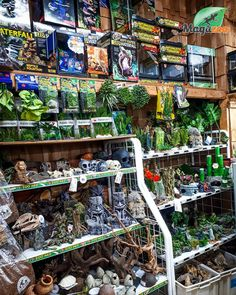 Spoil your reptiles with these awesome accessories! 😎 You can call us or visit our website to order all your pet reptile needs. We've got you covered from food, supplements to accessories! 🦎🐍🐢 #MagazooReptiles Reptile Shop, Witch Shop, Reptile Accessories, Arya, House In The Woods, Reptiles, Dreams, Canning, Website