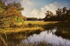 https://flic.kr/p/ZqV7Jg | DR4-006-1A | Tributary,Tuckahoe River.Corbin City NJ 35mm Nikon FM2 Fujicolor Pro 400
