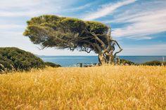 Capo Pecora- Costa Verde ,Sardegna, Italy