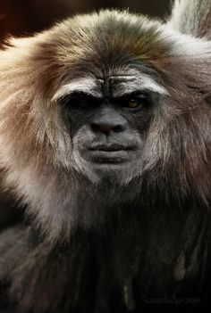 Sasquatch, a novel species of primate, exist as an extant hominin and are a direct maternal descendent of modern humans. #BigfootFace #SasquatchxSatanfudge