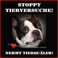 Stoppt Tierversuche! Nehmt Tierquäler!