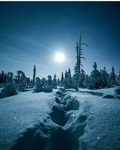 Birches, Seas, Finland, Mountains, Nature, Travel, Voyage, Viajes, Traveling