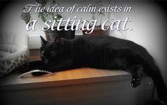 OccupyForLife: Maya, pisica mea neagra/ Maya , my black cat