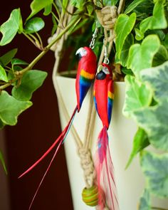 Aras Macao/Scarlet macaws   Boucles d'oreilles avec  plumes/ earrings with feathers.  Photo by @genovajex  .  .  .  .  #aras #macawparrot #scarletmacaw #parrots  #perroquet #birds #birdsofinstagram #parakeet #red #love #birdlovers #oiseaux #fashion #style #mode #summer #color #nature @etsyteamrhonealpes